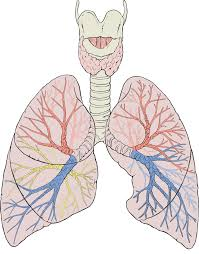 Natural Ways to Remove Fluid from Lungs | Just-Health net